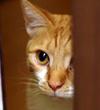 うちの中の野猫にっき
